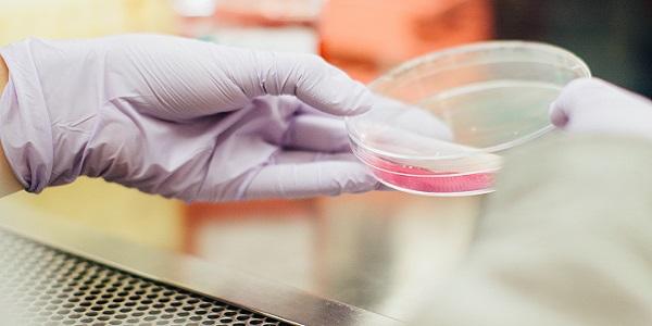 食品微生物测试