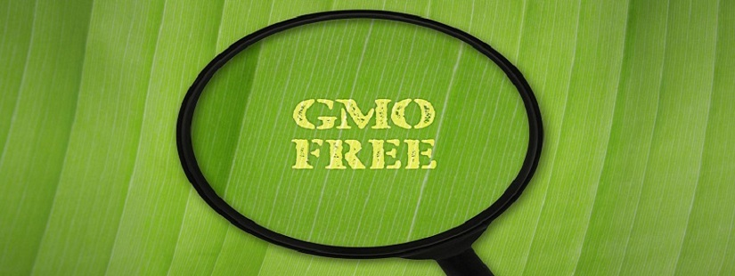 转基因食品测试