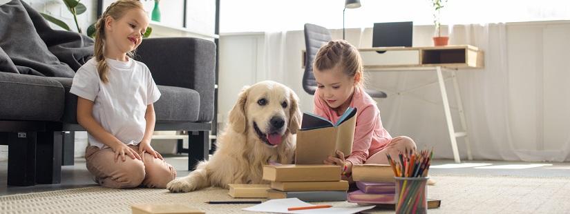 宠物用品测试