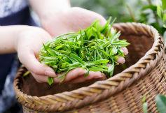 茶叶农残风险监控服务