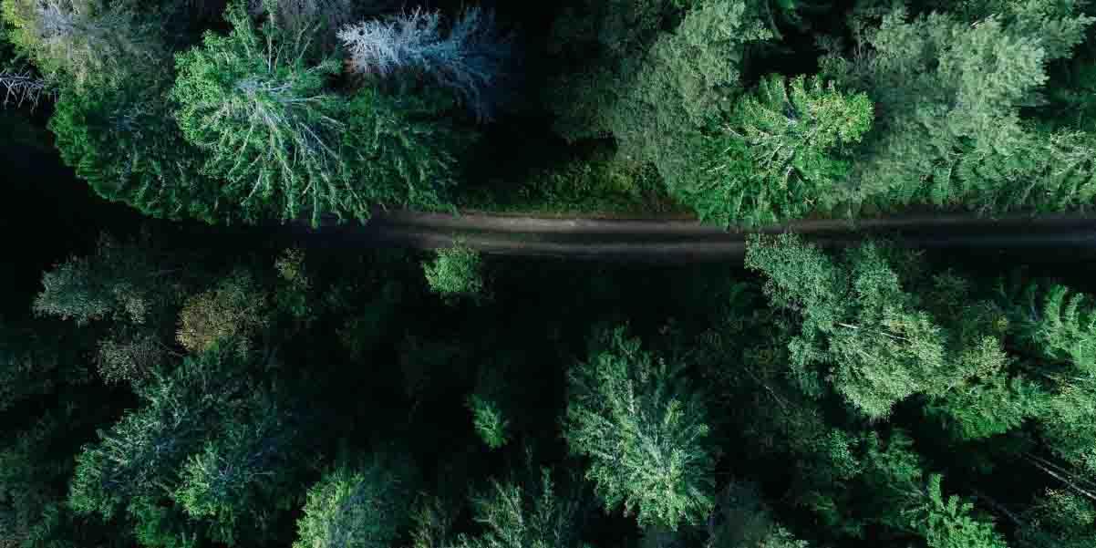 FM森林管理认证