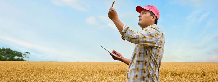 农产食品认证